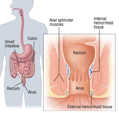 Makatta kanama yapabilen organlar